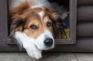 Hundehütte isolieren